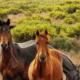 Pferd Magengeschwür